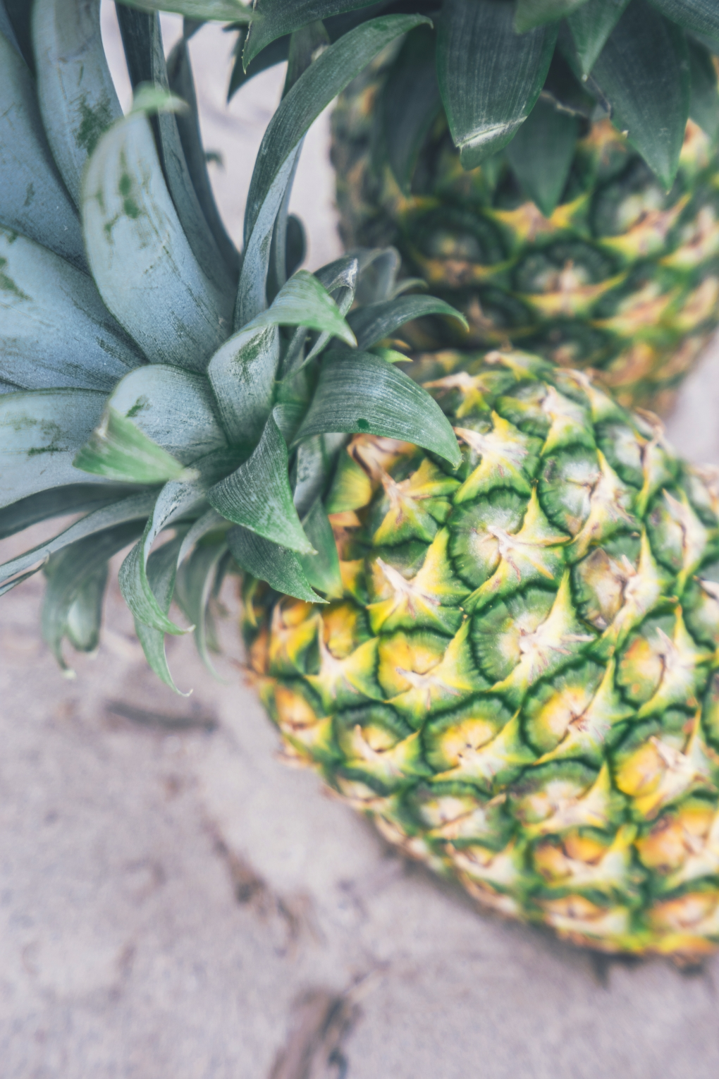 pineapple-supply-co-29604