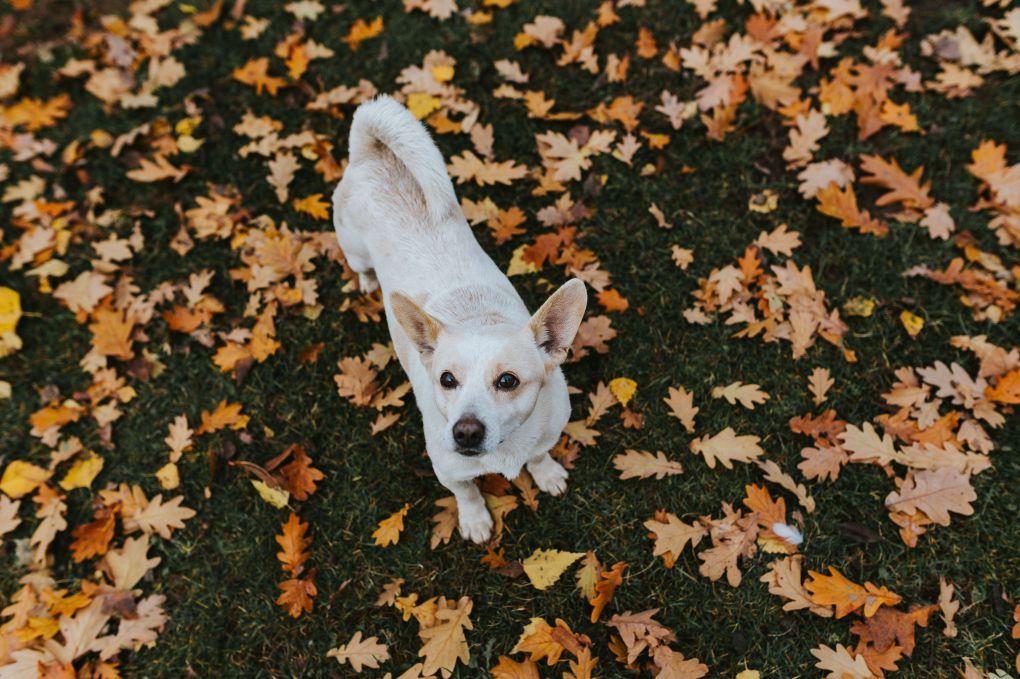 kaboompics_Autumn walk with dogs