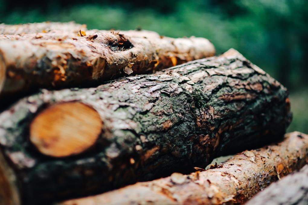 kaboompics_Wood trunks Wall
