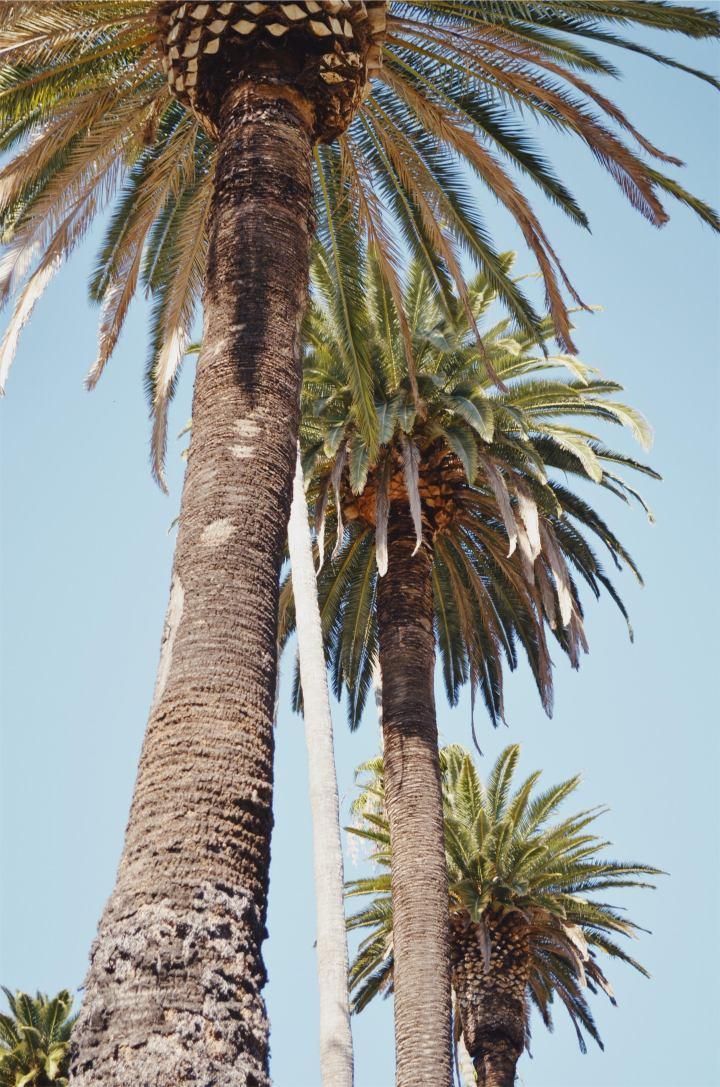 Exploring LA