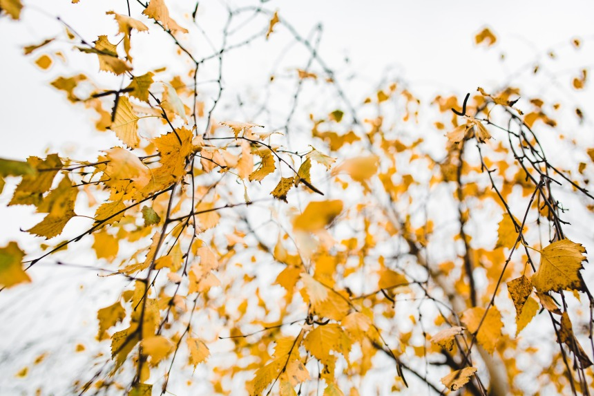 kaboompics_Autumn Details